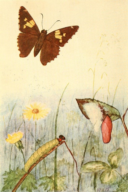 "illustration by Willey Ingraham ""W.I."" Beecroft (b. 1870)"