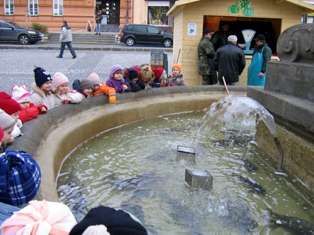 Christmas carps in public fountain in Uherský Brod, southeast Morava, eastern Czech Republic