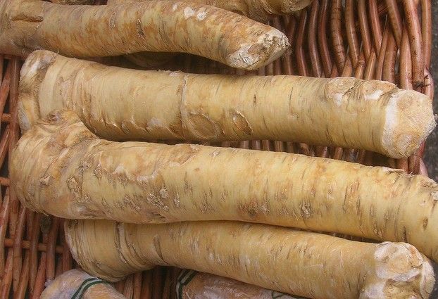 distinctively horseradish