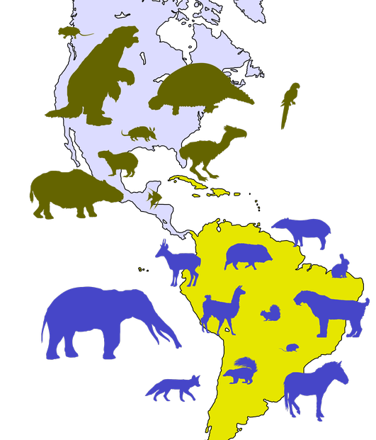 Great American Biotic Interchange was caused by the tectonic creation of the Isthmus of Panama in the late Pliocene.