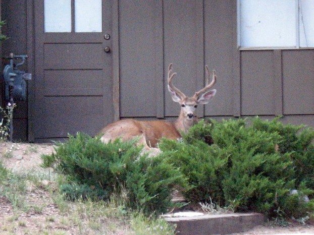 """Deer hanging out by neighbor's garage"""
