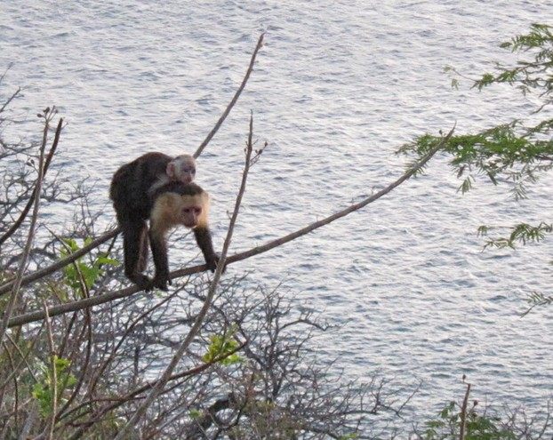 "Christmas eve visit, Costa Rica: ""monkey on your back"""
