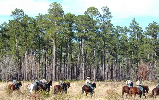 Confederate Calvary at the Battle of Olustee
