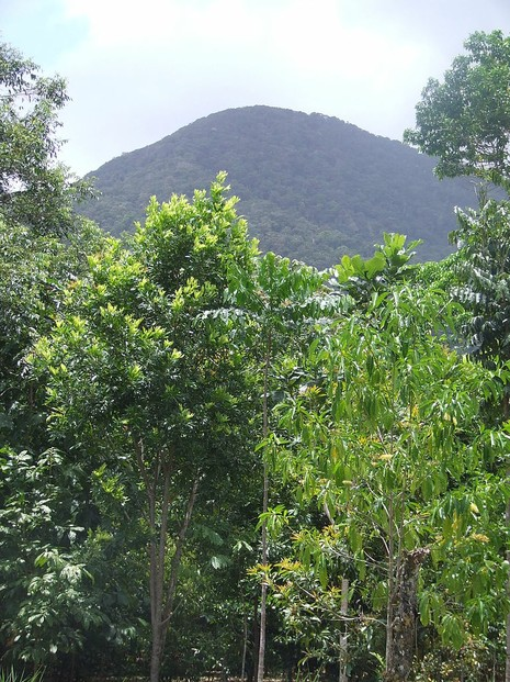 view of Mount Sorrow, Cape Tribulation, northern Queensland