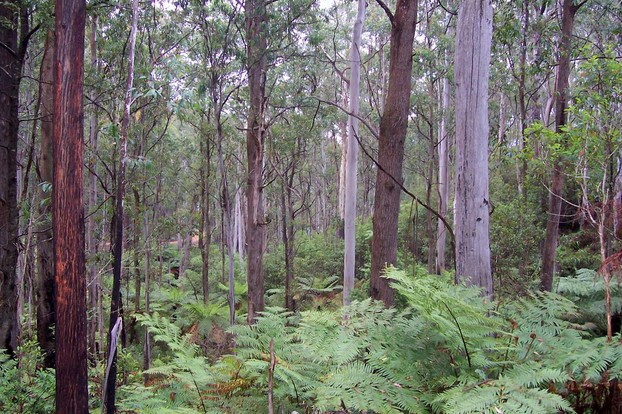 Deua National Park, southeastern New South Wales, southeastern Australia