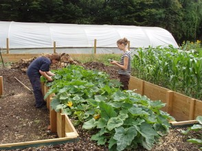Vegetable beds for disabled access