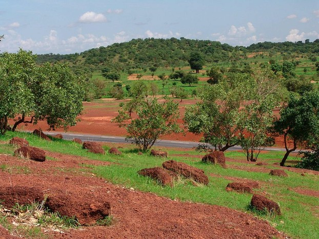 Road Bamako-Kayes: Low rolling hills on the way to Kayes. Foreground: acacias; rear center: large baobab tree.