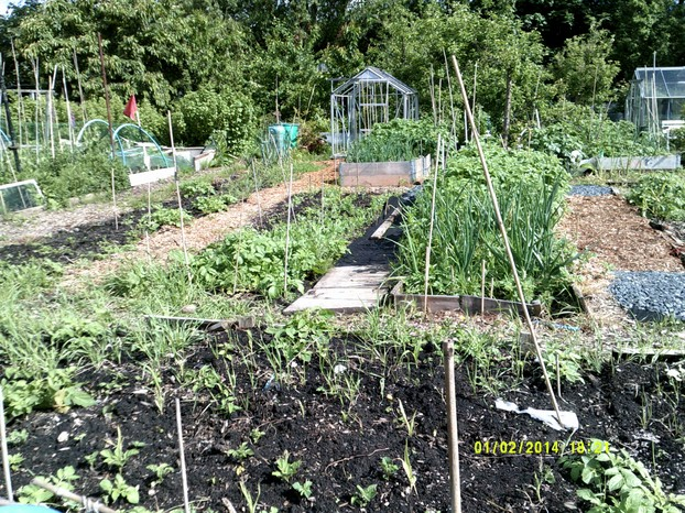 The front of the allotment