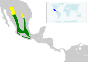 Lampornis clemenciae map