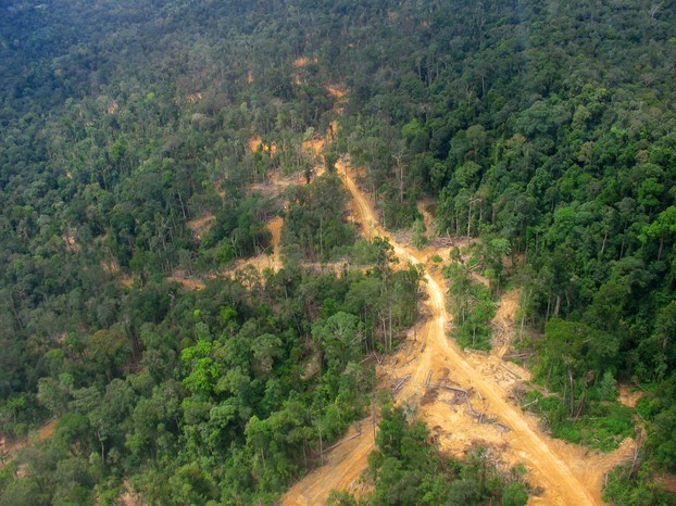 Logging road and impacts in East Kalimantan: logged forest on the left, virgin/primary forest on the right.