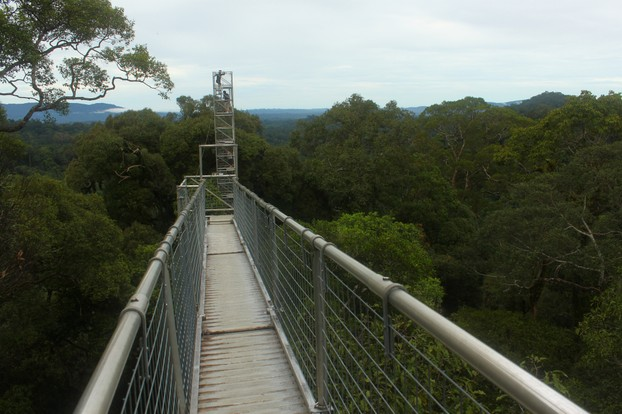 canopy walk,  Ulu Temburong National Park, Batu Apoi Forest Reserve, northern Borneo, Brunei
