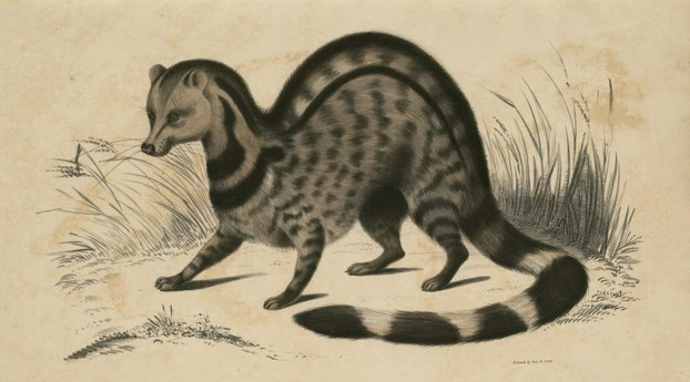 John Edward Gray, Illustrations of Indian Zoology, Vol. II (1833-1834), Plate 5