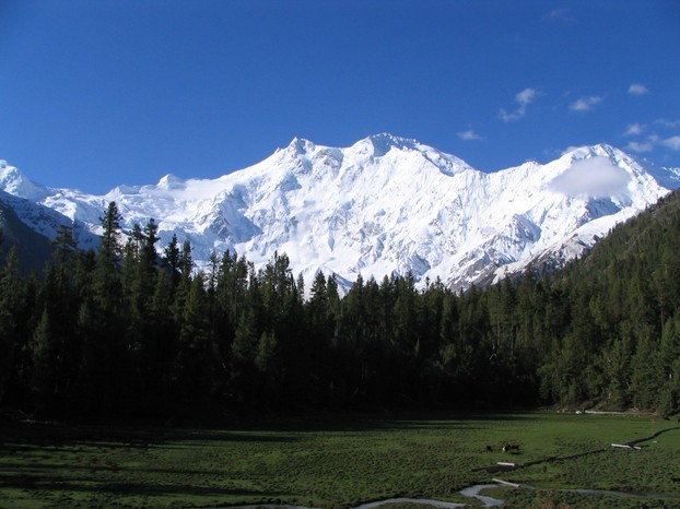 grassland with a view: Nanga Parbat, at 26,660 ft (8,126 m), world's 9th highest mountain: Gilgit-Baltistan Region, NE Pakistan