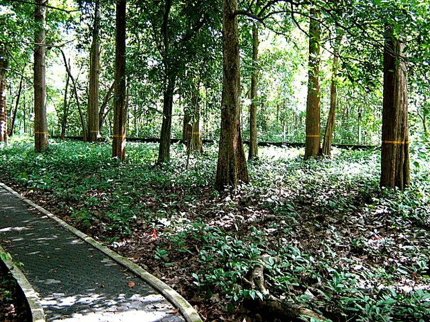 Conolly Plot: about 3 miles (5 km) southwest of Nilambur