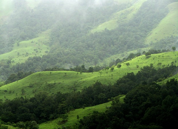 The Shola Grasslands and Forests in the Kudremukh National Park, Western Ghats, southwestern Karnataka, South West India
