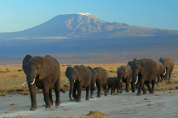 Amboseli National Park, Kajiado District, Rift Valley Province, south central Kenya, East Africa