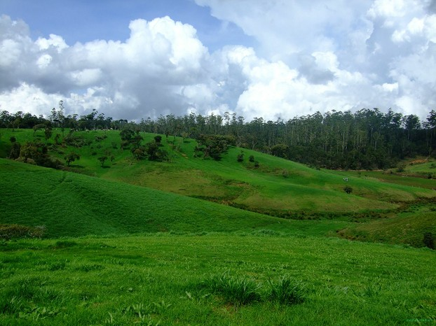 Ambewela Farms, Nuwara Eliya District, Central Province, Sri Lanka