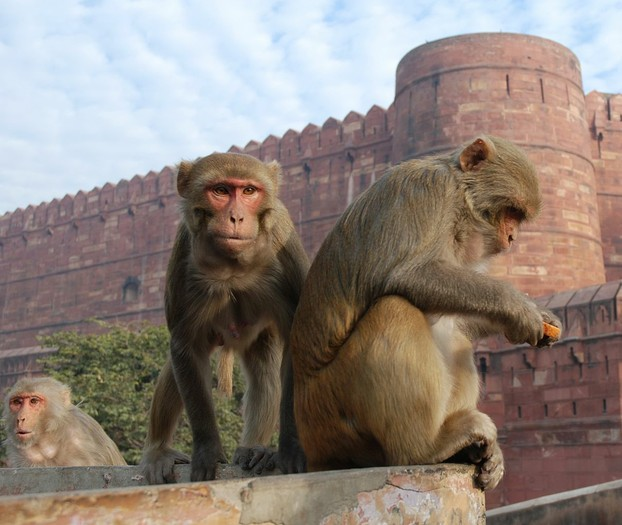 The Red Fort of Agra, Uttar Pradesh, north central India