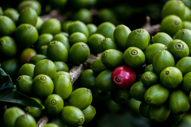 Monkey Parchment Coffee: Biodynamic Methods and Cosmic
