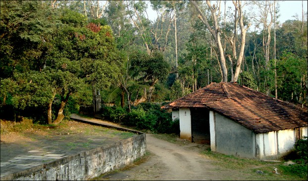 Karnataka's coffee growing area