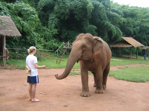 Anantara Golden Triangle Elephant Camp, Chiang Saen, Chiang Rai Province, northwestern Thailand