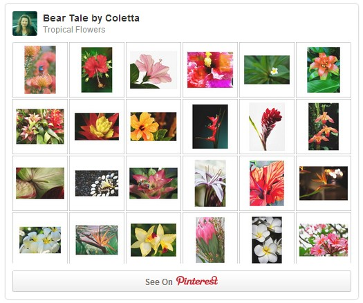 Follow Tropical Flowers on Pinterest