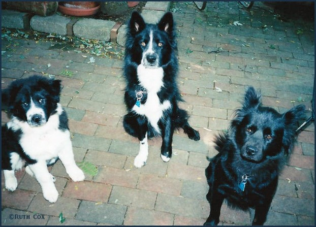 Ruthi's Marvelous Mutts: NewBe, Scratch, and Tidbit