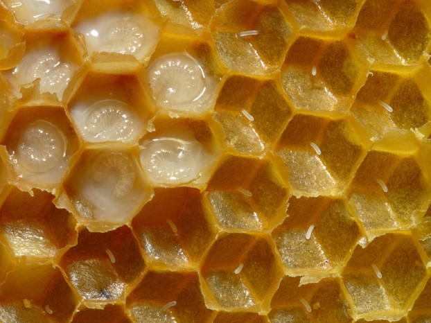 closeup of honeycomb