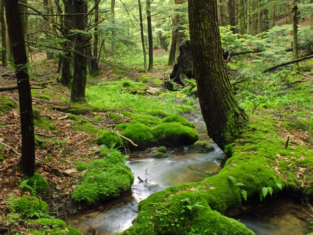 Hook Natural Area, central Pennsylvania