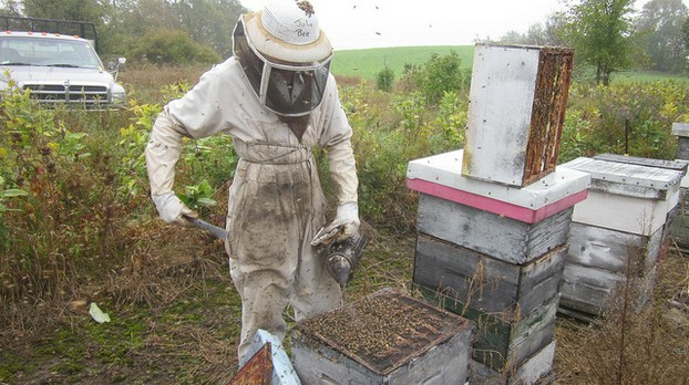 Taking off the queen excluder under the honey super