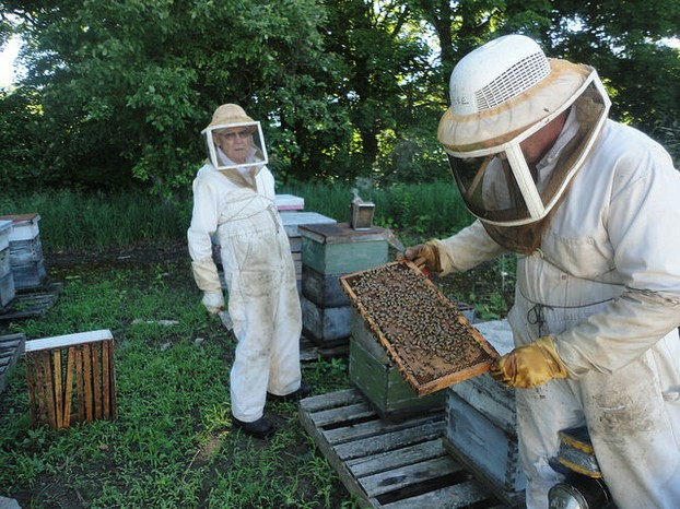 Beekeepers Checking Full Frames of Brood