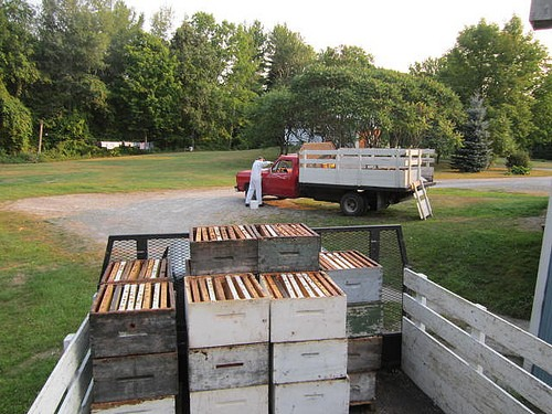 A truck load of empty boxes for beehives