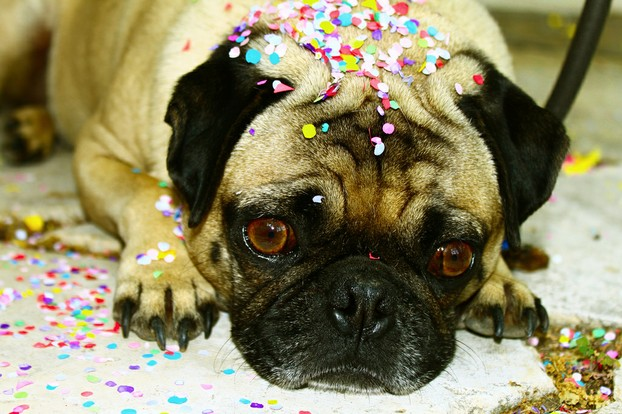 Dog with confetti on head