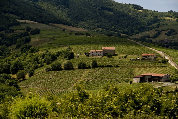 Beaujolais wine region, south of Burgundy, east central France