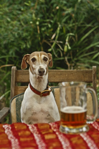 """Day 144- 365 Will you have Beer with me ????"""