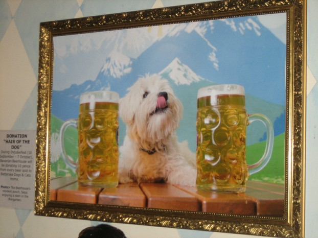 "Bavarian Beerhouse: ""The Beerhouse's resident pooch, Sepp, enjoying a stein in the Biergarten."""