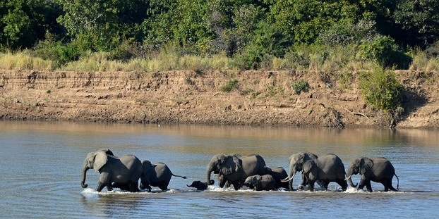 African Savanna biome: Luangwa River, South Luangwa National Park, eastern Zambia