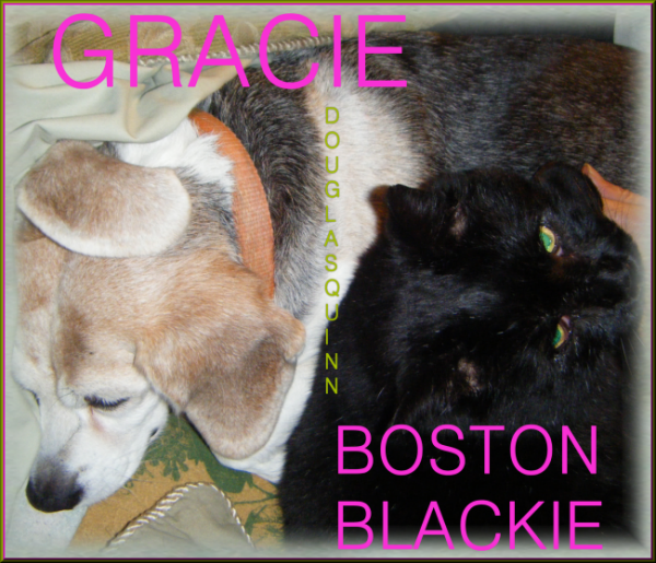 Gracie and Blackie, Undercover Dog and Sidekick Cat