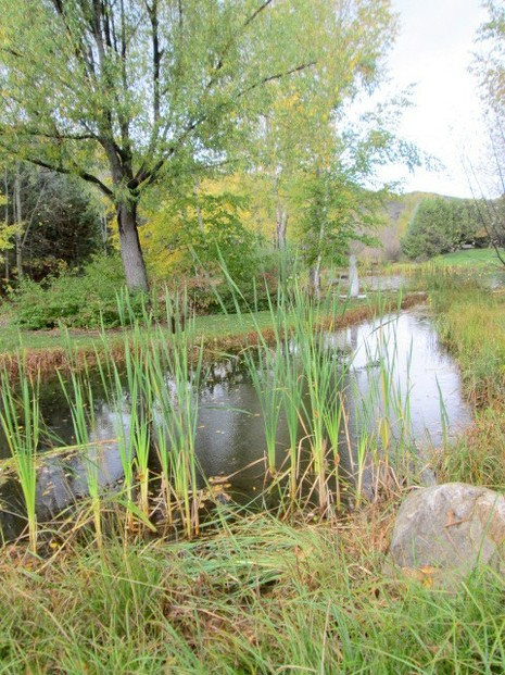 Cattails by Stream at Yampa River Botanic Park