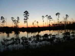 Last of the evening light in the Okefenokee Swamp.