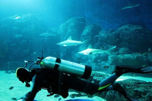 Diver in an aquarium with sharks and fish