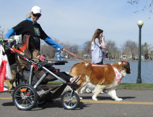 Another St. Bernard in the Parada