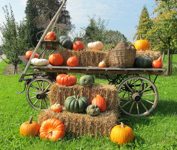 Pumpkins in a wooden wagon