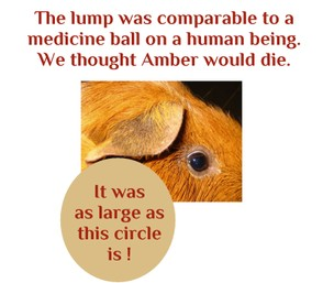 Poor Amber Lynn - the lump was HUGE!