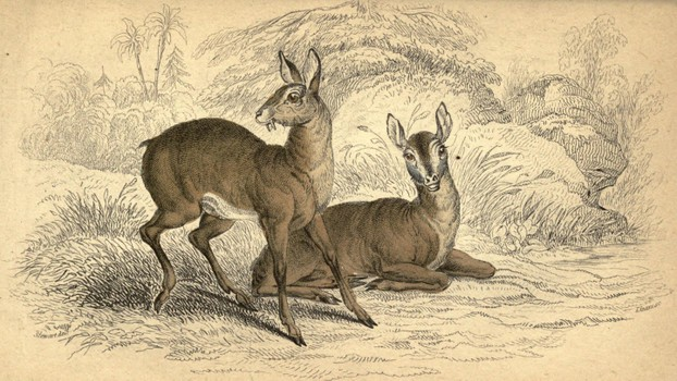 Sir William Jardine, The Naturalist's Library, Vol. XXI, Plate III, opp. p. 116