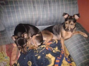 Zoey and Roxie Have Taken Over The Chair