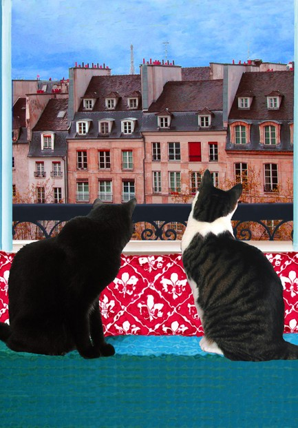 Cats in a Paris Window