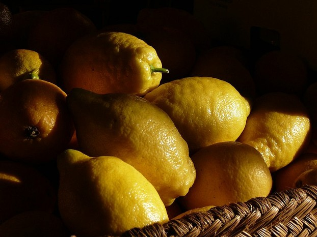 fresh lemons (Citrus x limon)