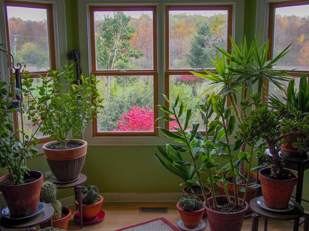 USDA Zone 5: houseplants moved from greenhouse to home in Clinton, Michigan