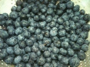 With my gelato machine I can turn these fresh New Jersey blueberries...